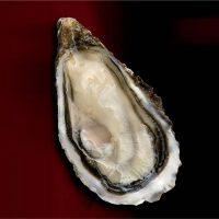 Oysters La Lune Cadoret