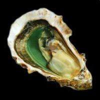 Oysters Perle Noire Cadoret